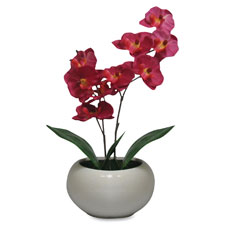 "Moth Orchid Fuchsia Plant, Silk Leaves, 5"" Pot, Purple  (1 EA)"